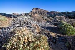 高度云彩高山顶国家公园倾吐的显示teide tenerife 免版税库存照片