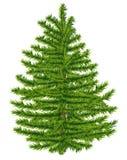 高度详细杉树。 免版税库存图片