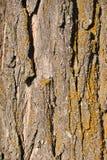 高度详细的树皮纹理,背景 免版税图库摄影