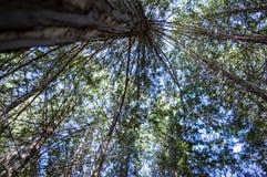 高昂的树 库存照片