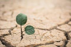 高明的干燥地面的一点绿色植物 图库摄影