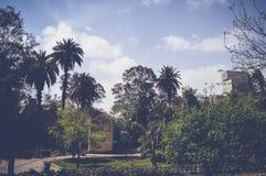高树和棕榈在鱼庭院里 库存图片