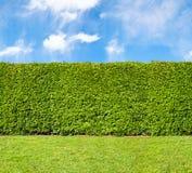 高树篱不尽的无缝的样式 库存照片