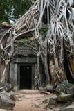 高棉长满的废墟 库存照片