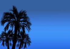 高棕榈树剪影有夜空背景 库存照片