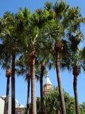 高棕榈树 免版税库存照片