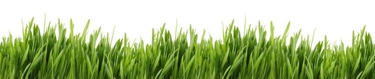 高横幅的草 免版税图库摄影