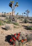 高沙漠风景和开花的仙人掌 免版税库存照片