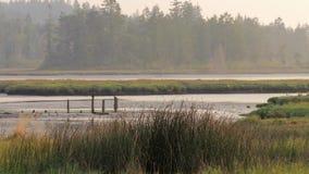 高沼泽地放牧摇摆在微风 影视素材