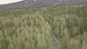 高涨山行迹 夹子 森林足迹顶视图在山的 森林全景山的在多云 股票录像