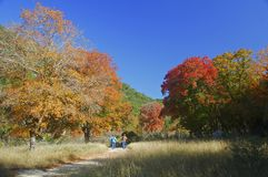 高涨槭树的峡谷 免版税库存图片