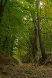高涨跟踪Hirschgrundweg 01 免版税库存照片