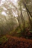 高涨路径的有雾的森林 免版税图库摄影