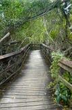 高涨路径的木板走道 免版税图库摄影