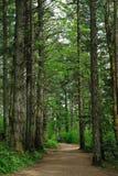 高涨雨线索的森林 免版税库存图片