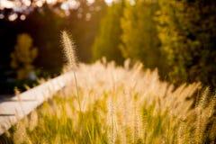 高独特的草和太阳 免版税库存照片
