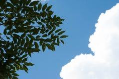高的云彩 库存图片