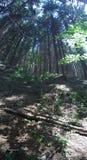 高的森林 免版税库存照片