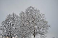 高积雪的树在冬天 库存图片