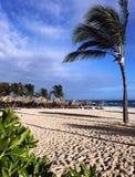 高稀薄的可可椰子树弯曲在海滩的风下从沙子 海滩,平房,天空,云彩 免版税库存图片