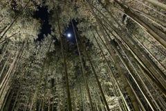 高竹子森林在与凝视通过在机盖的一个孔的月光的晚上 库存图片