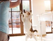 高级妇女和狗 免版税库存图片