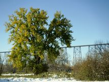 高级桥梁 免版税库存照片