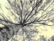 高结构树 库存照片