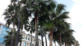 高绿色枣椰子和旅馆屋顶在凯梅尔,土耳其 免版税库存照片
