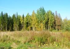 高草和森林 库存图片