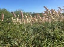 高草密集的丛林在盐水湖附近的全国生态公园 库存图片