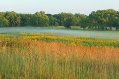 高草有薄雾的早晨的大草原 库存图片