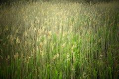高草的自然图象沿海岸地区的 免版税库存照片