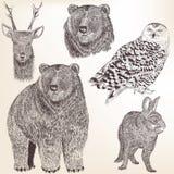 高详细的传染媒介动物的汇集设计的 免版税库存照片