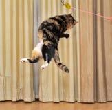 高跳跃的猫 免版税库存照片