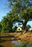 高跷的议院在古老树下 图库摄影