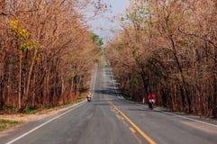 高速公路与大树的路场面沿双方,温暖的平衡的l 免版税库存图片