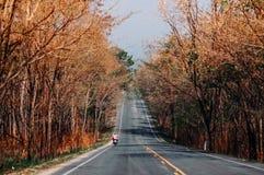 高速公路与大树的路场面沿双方,温暖的平衡的l 库存图片