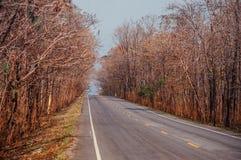 高速公路与大树的路场面沿双方,温暖的平衡的l 库存照片