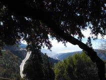 高速公路在森林 图库摄影