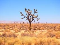 高速公路101沙漠 库存照片