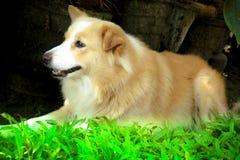 兴高采烈的狗 图库摄影