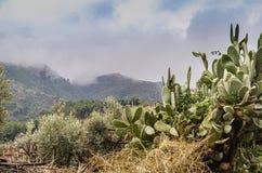 高阿特拉斯山脉山的植物群 E 图库摄影
