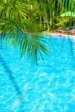 高,美丽的棕榈树rostut游泳池边,在一家豪华旅馆附近 热带亚洲 库存图片
