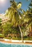 高,美丽的棕榈树rostut游泳池边,在一家豪华旅馆附近 热带亚洲 免版税图库摄影