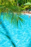 高,美丽的棕榈树rostut游泳池边,在一家豪华旅馆附近 热带亚洲 免版税库存图片