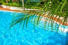 高,美丽的棕榈树rostut游泳池边,在一家豪华旅馆附近 热带亚洲 图库摄影
