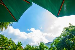 高,美丽的棕榈树rostut游泳池边,在一家豪华旅馆附近 热带亚洲 免版税库存照片