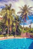 高,美丽的棕榈树rostut游泳池边,在一家豪华旅馆附近 热带亚洲 库存照片