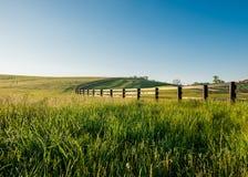 高满地露水的草在肯塔基的绵延山 免版税库存图片